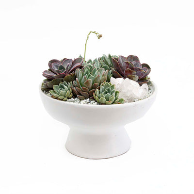 Succulents & Quarts In White Ceramic Pedestal