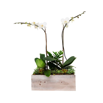 Orchids and Succulents in White Wooden Rectangle Planter