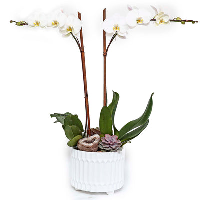 White Orchids & Geode In Small White Geometric Planter