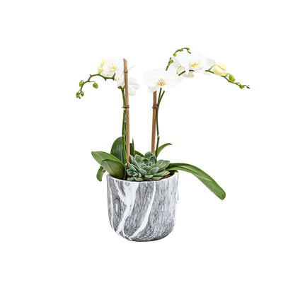 Mini White Orchids & Succulents in Faux Marble Pot