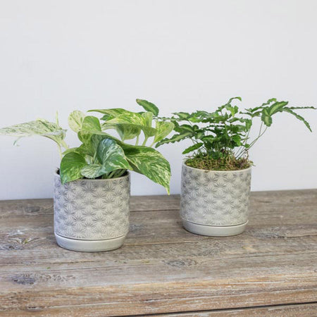 "PAIR OF 5"" GREY STARBURST POTS"