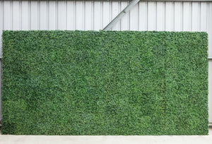 Arch Hire - Backdrop 200cm Boxwood Topiary Foliage Wall Melbourne Hire