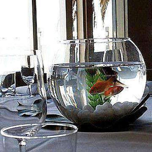 Centrepiece Hire - Centrepiece Rent Goldfish In Fish Bowl Beach Event Sydney Hire