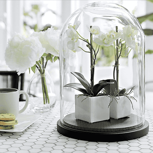 Centrepiece Hire - Glass Dome Cloche 50cm Retail Display Event Expo Melbourne Hire