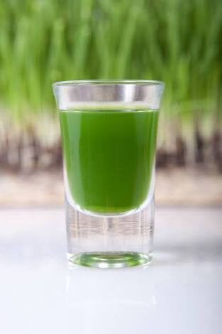 Wheat Grass Shot (In-Store Only)