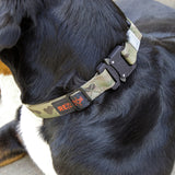 Cobra Buckle K9 Collar
