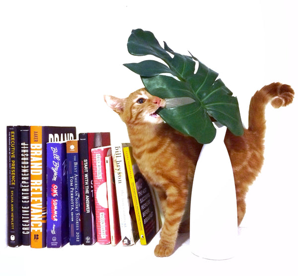Marble marble bengal kitten cat leaf colored books