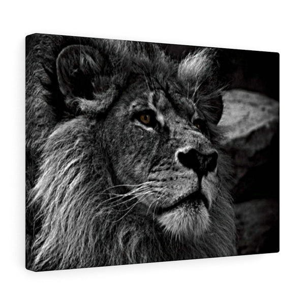 Black and White Gray Lion Head Portrait by First Wall Art