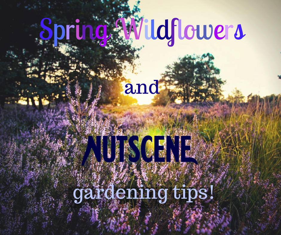 Spring Wildflowers and Nutscene's gardening tips!