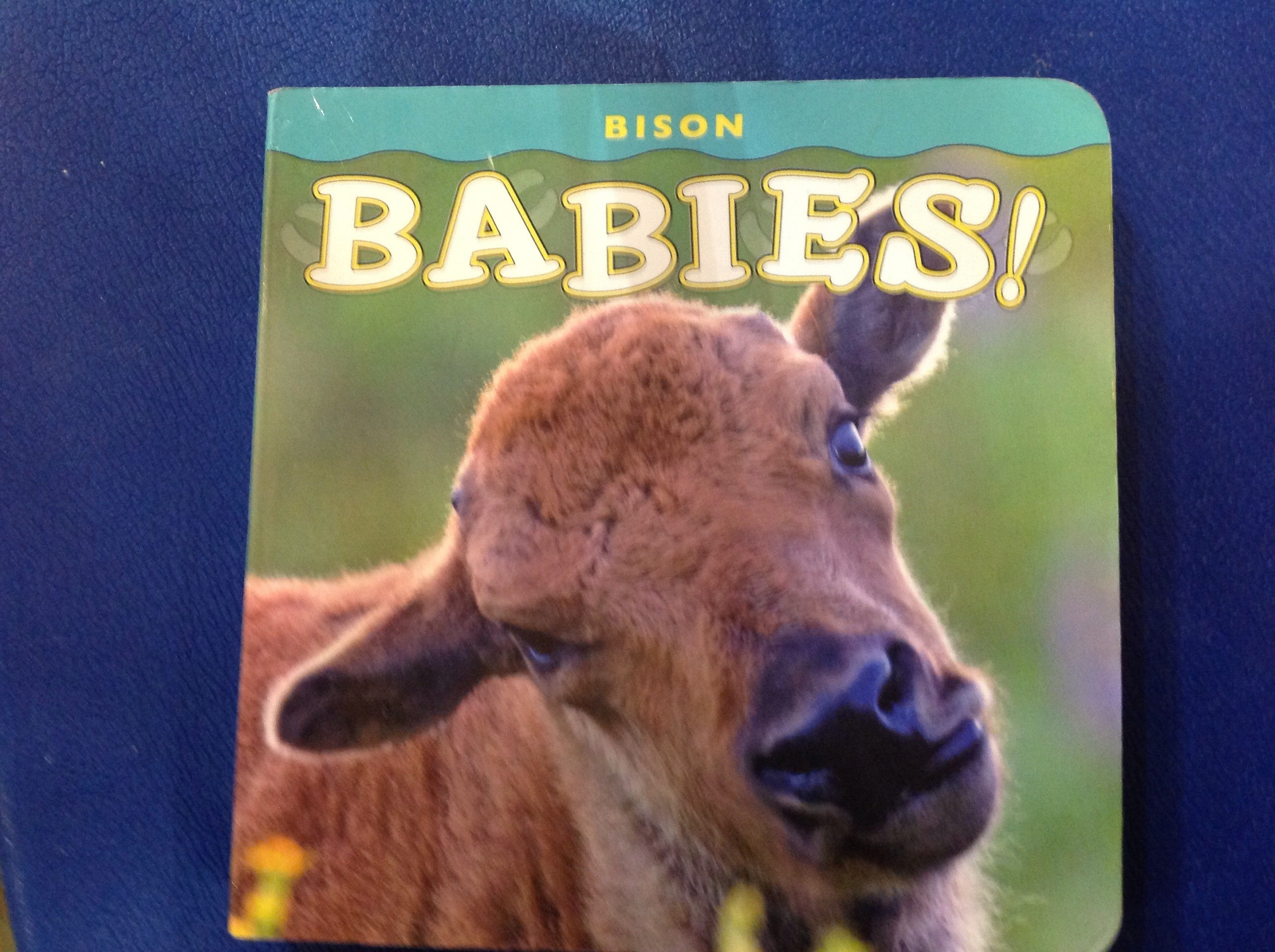BOOKS - Bison Babies