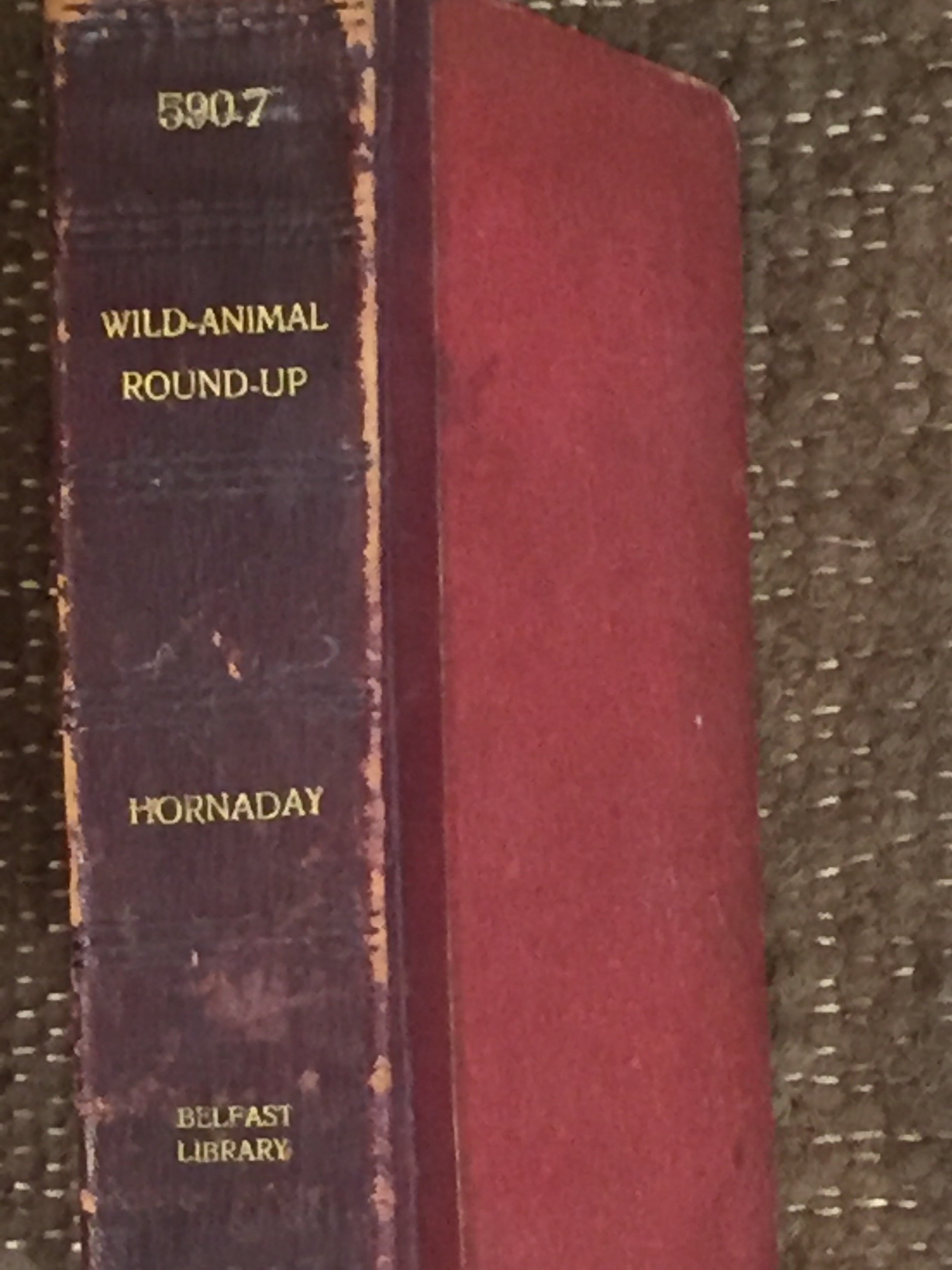 BOOKS - A Wild Animal Roundup by Hornaday