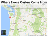 Gourmet Original Flavor Smoked Oysters from the Willapa Bay, Washington USA by Ekone Oysters (6-PACK) - Bear Claw Organics, LLC