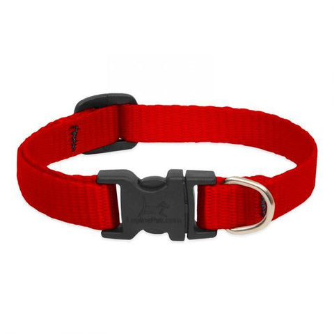 Lupine Basics Red Collar