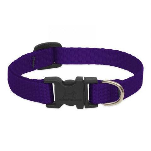Lupine Basics Purple Collar