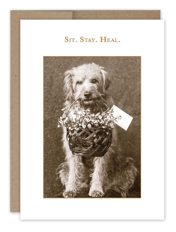 Shannon Martin Get Well Card – Sit Stay Heal