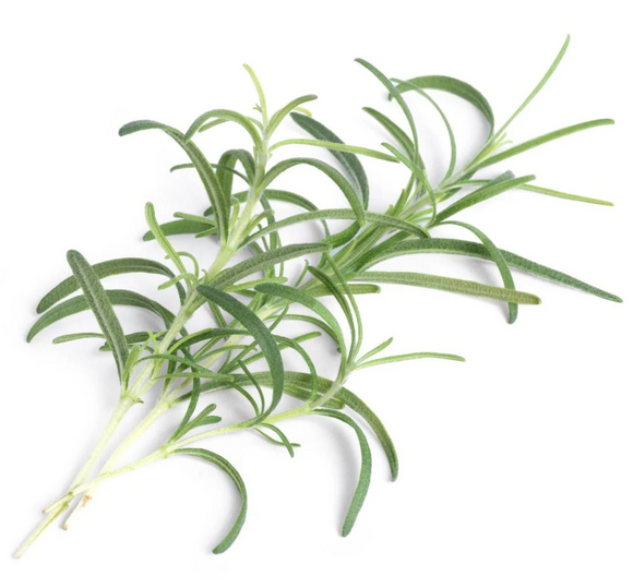 Smart Veritable Garden Lingot Seed Pod – Rosemary