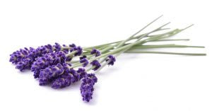 Top 5 Essential Oils for PCOS