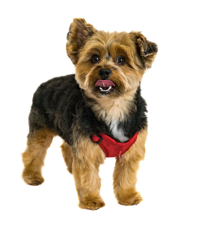 Zippy Harness XS Built-In Leash and Harness