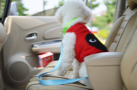 Zippy Seat Belt