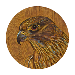 Karearea on Timber art print by New Zealand artist John Jepson of a circle Karearea New Zealand falcon on timber