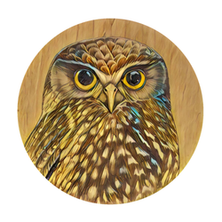 Ruru on Timber art print t shirt by New Zealand artist John Jepson. This t shirt features a beautiful circle art print of a Ruru NZ native owl with a wood background