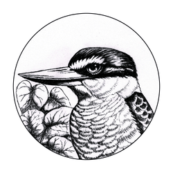 Kotare in Charcoal art print by New Zealand artist John Jepson of a circle charcoal drawn Kotare New Zealand kingfisher