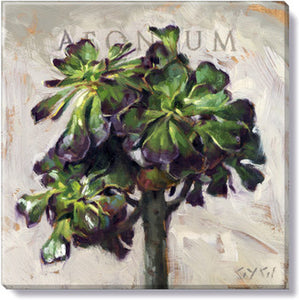 Gygi Aeonium, Canvas Wall Art, Medium