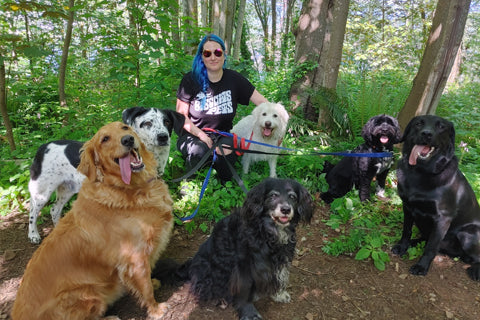 vancouver dog walkers