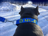 Seat Belt Collar - Neon Blue