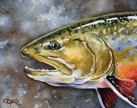 Brook Trout II