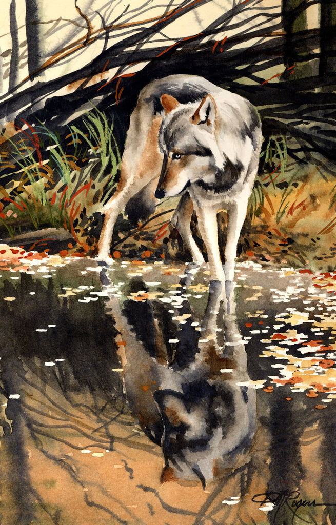 Wolf Reflection