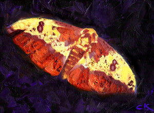 Imperial Moth 5x7