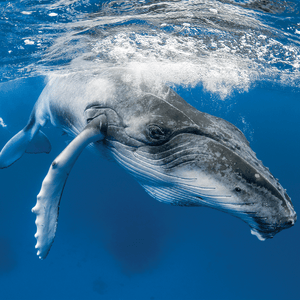 What to Consider Before Booking a Marine Animal Swim