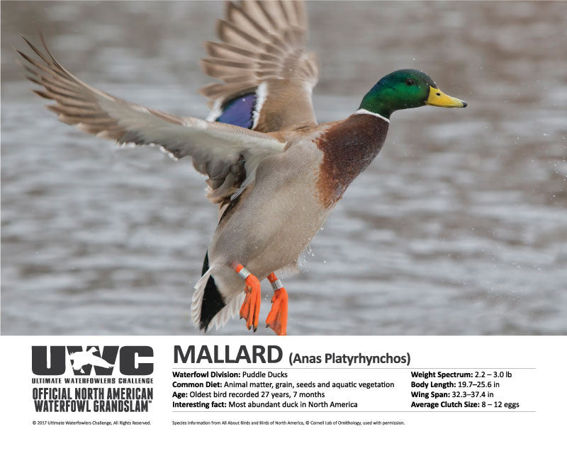 UWC MALLARD WATERFOWL POSTER
