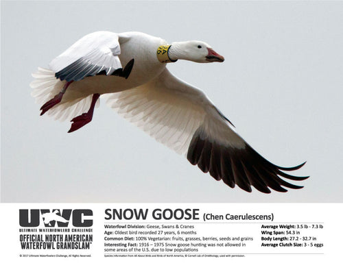 UWC SNOW GOOSE WATERFOWL POSTER