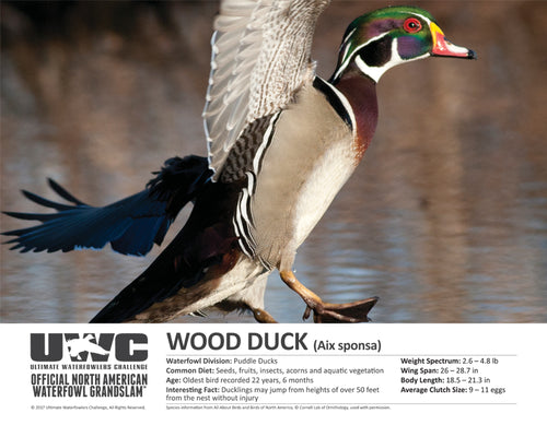 UWC WOOD DUCK WATERFOWL POSTER