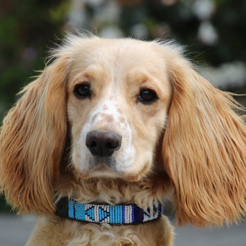 Dog Collars    From £22