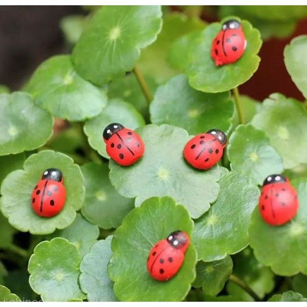 All Products,Gardens - 10 Miniature Ladybirds