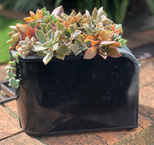 Dont Toast your Succulents (Black)