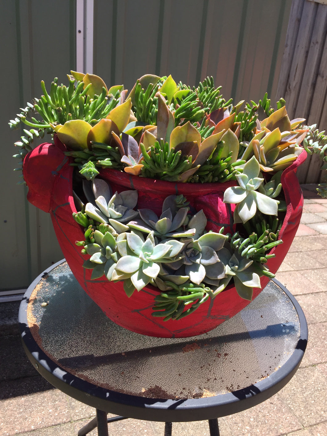 The Crack Pot of Succulents