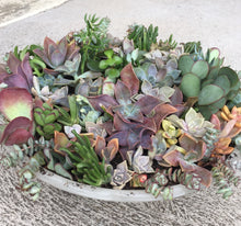 Succulent Shade of Love