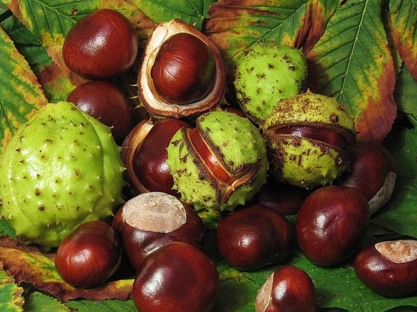 1kg Horse Chestnuts