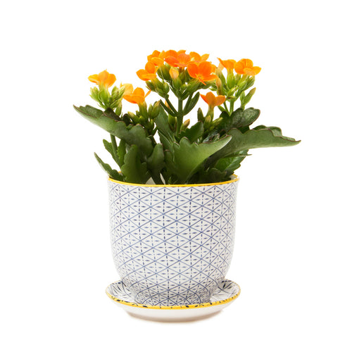 Liberte ceramic plant pot with drainage and saucer blue cross