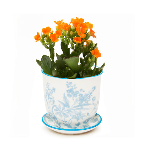 Liberte ceramic plant pot with drainage and saucer blue garden