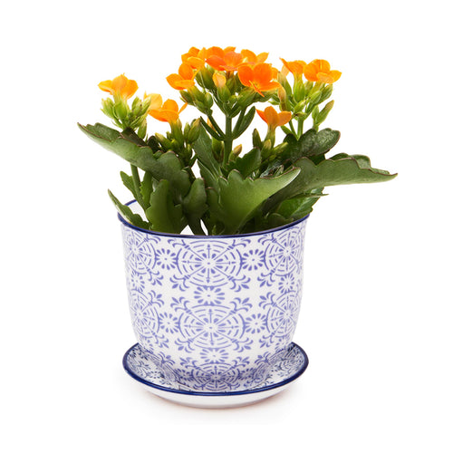 Liberte ceramic plant pot with drainage and saucer blue lace blue rim