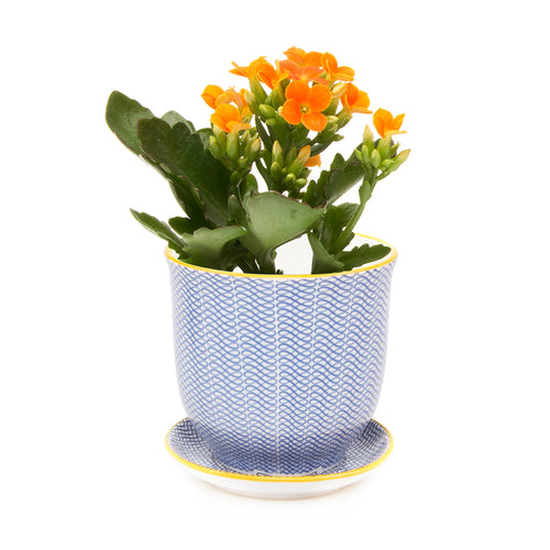 Liberte ceramic plant pot with drainage and saucer blue ribbon