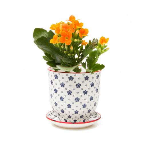 Liberte ceramic plant pot with drainage and saucer blue stars