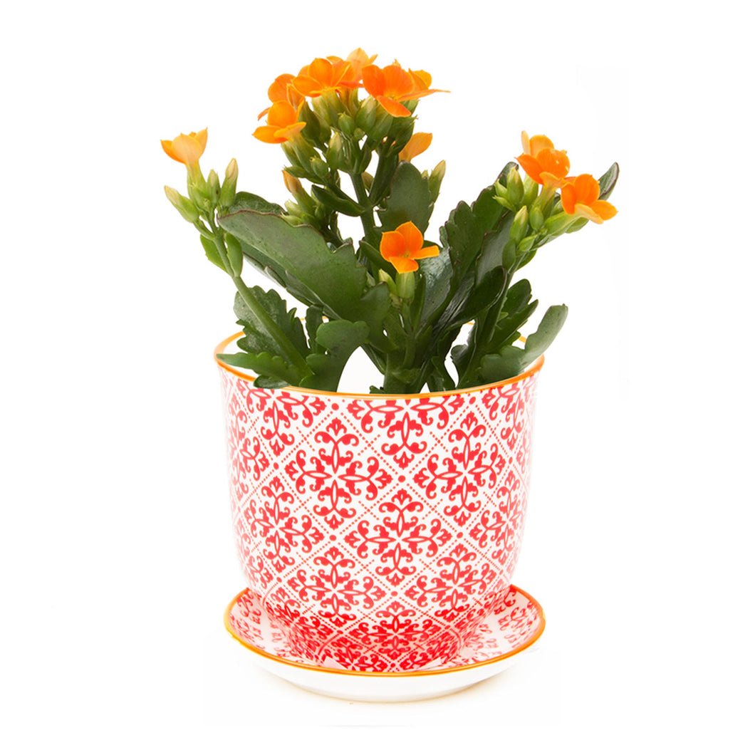 Liberte ceramic plant pot with drainage and saucer red diamonds