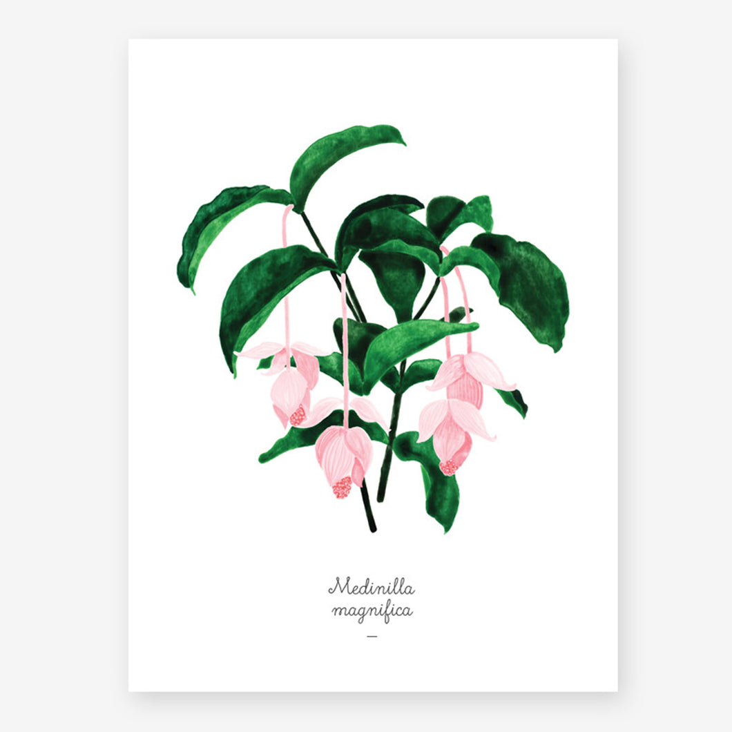 all the ways to say Medinilla Magnifica plant print