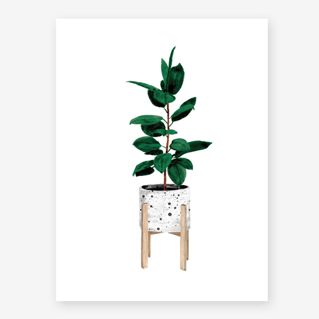all the ways to say ficus plant print